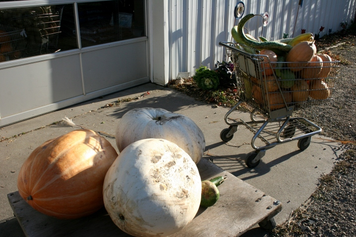 The $10 ginormous pumpkins.