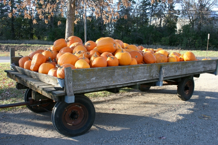 One of two wagonloads of pumpkins at Twiehoff's Garden.