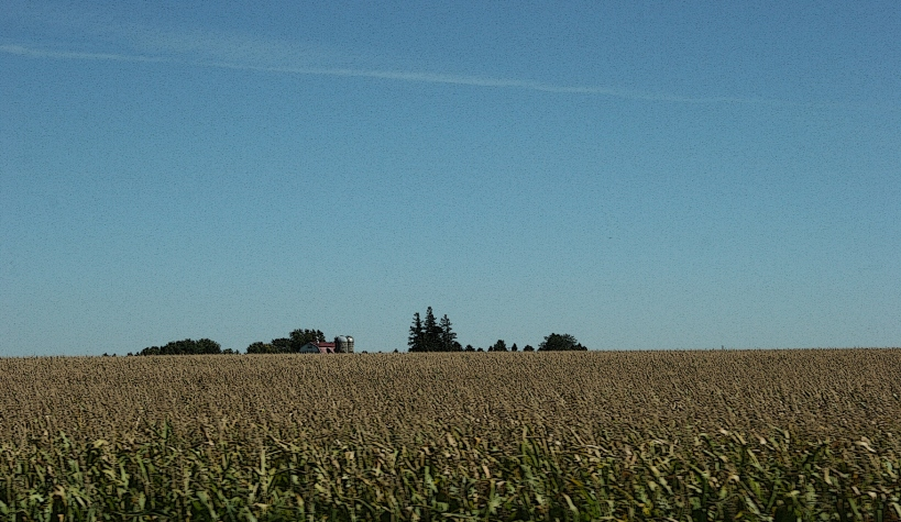 Rural, farm behind corn field
