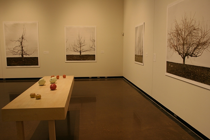 A snippet of Jessica Rath's exhibit shows porcelain apple sculptures and photos of apple trees in the Braucher Gallery.