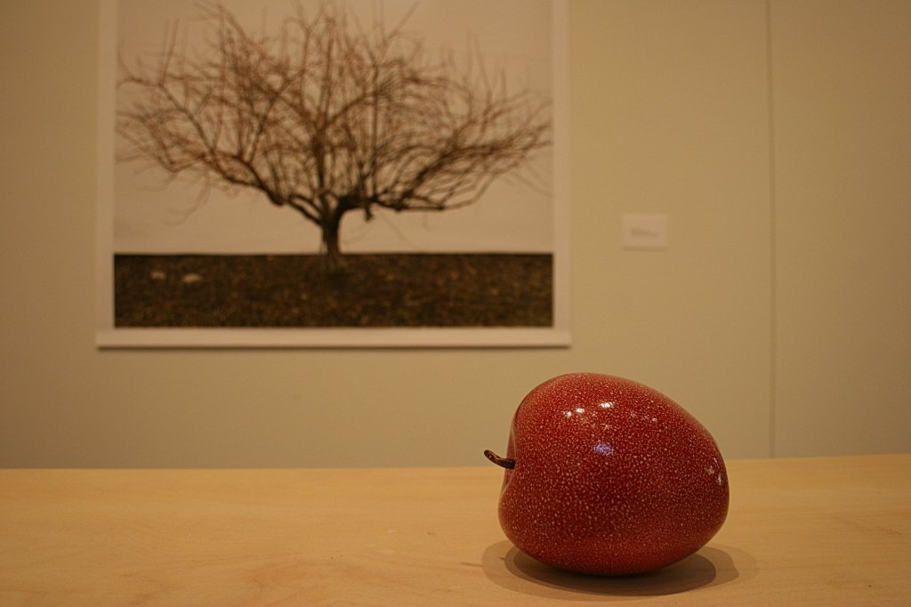 "From Jessica Rath's ""take me to the apple breeder"" exhibit, a porcelain apple and an apple tree photograph."