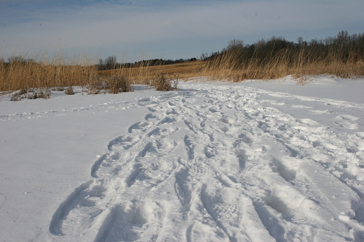 Fresh tracks showed us that others snowshoed and skied through the nature center.