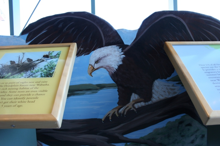 Art, eagle painting