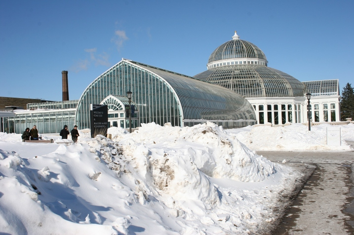 Photographing the Marjorie McNeely Conservatory in the cold Sunday afternoon.