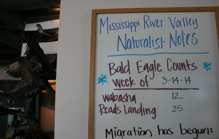 The current eagle count tallied.
