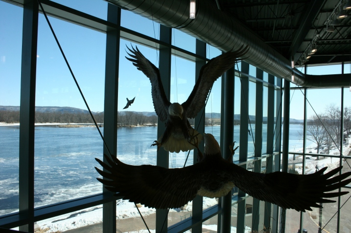 Eagles suspended from the ceiling and a view of the river from the second floor of the eagle center.