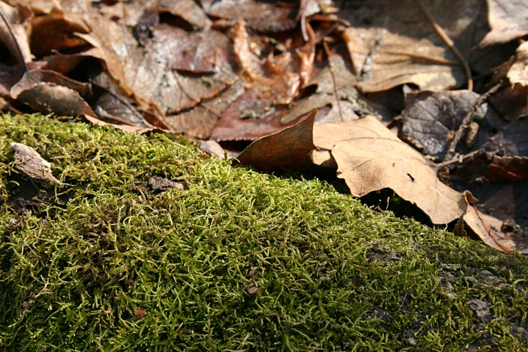 The brightest green discovered--moss on a log.