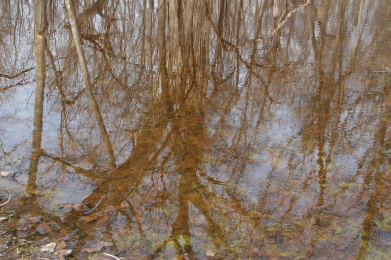 "Trees reflected in a ""lake"" of water from the snow melt."