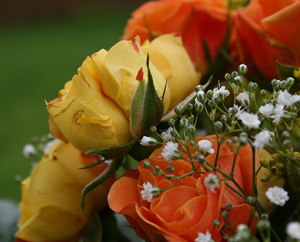 Bouquet, roses close-up