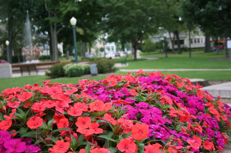 Impatiens fill planters in the park.