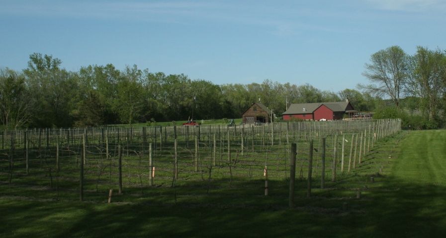The winery and its vineyard.