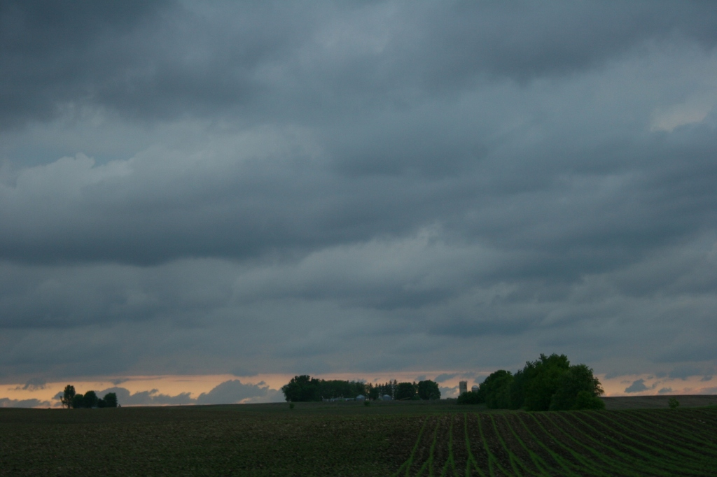 Corn sprouts along Minnesota Highway 60 east of Faribault. Photographed around 7:45 p.m.