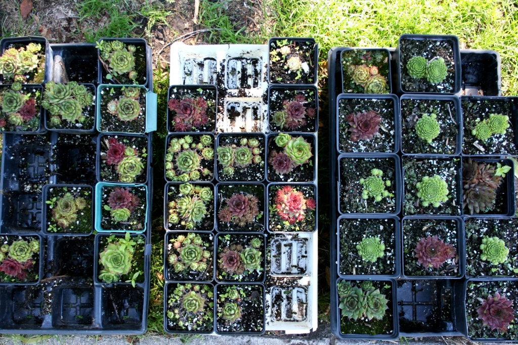 Plenty of plants were available for purchase at the market.