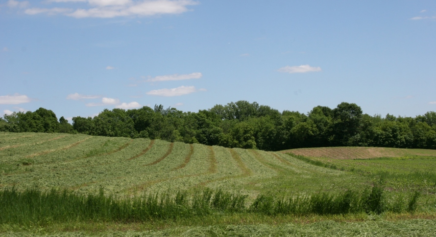 Of all the country smells, I think my favorite is that of freshly-cut alfalfa.