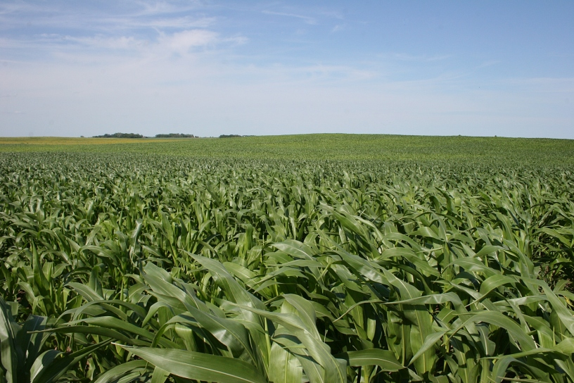 Corn and soybean fields define southwestern Minnesota.