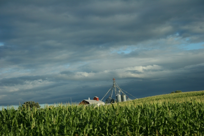 Barn and bins behind a corn field near Waterville.