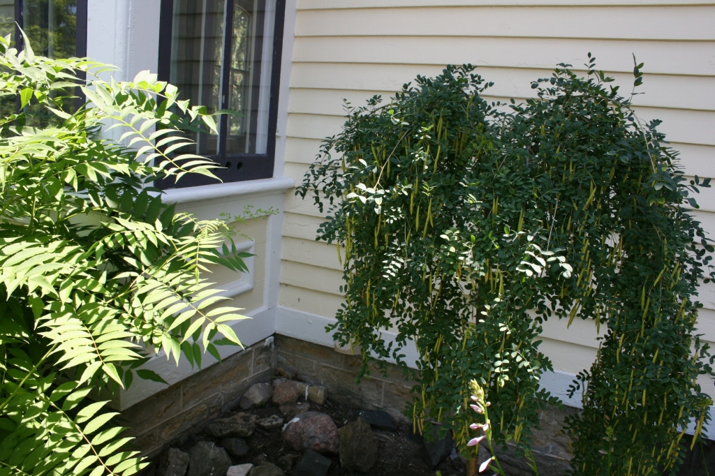 I love the interesting plant, right, tucked into a corner of the home's exterior. Anyone know its identity? I should have inquired.