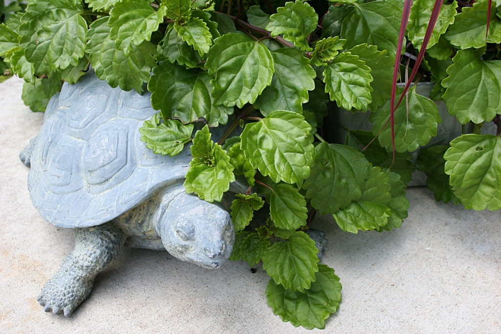 This turtle tucked next to a pot of ivy and other plants belonged to Elizabeth's mother.