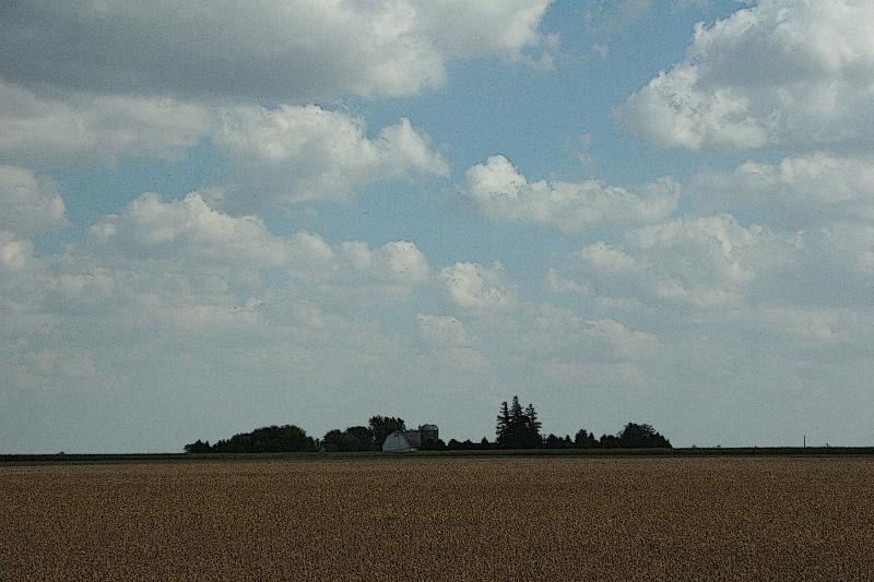 Soybeans await harvest.
