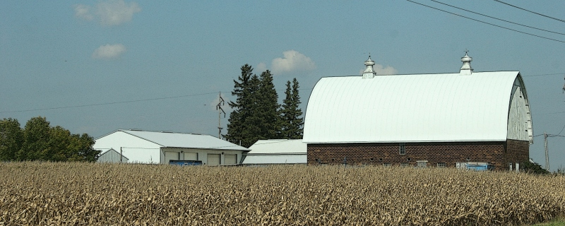 Drying cornfields herald the arrival of Autumn.
