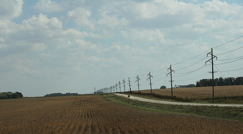 An idyllic rural scene of drying soybeans and gravel road just off Rice County Road 24.