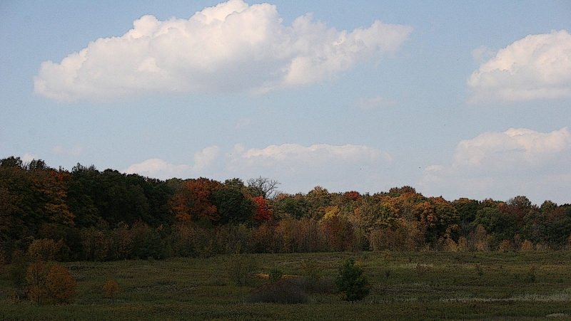 A tree line tinged in color at Nerstrand Big Woods State Park in southeastern Minnesota.