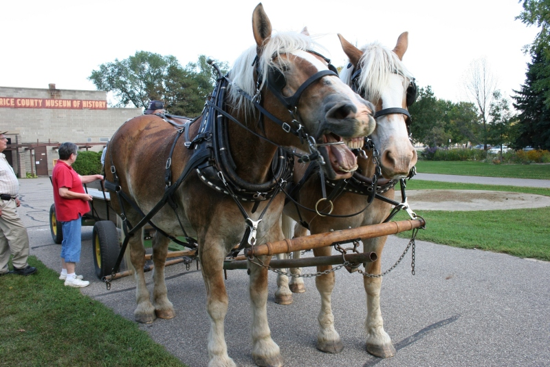 Mike and Pat bring their horses and wagon to many area events.