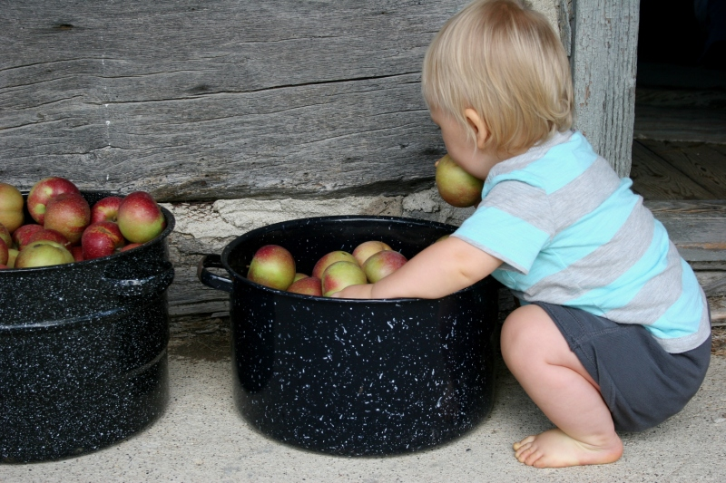 Luke, 13 months, finds an apple outside the log cabin.