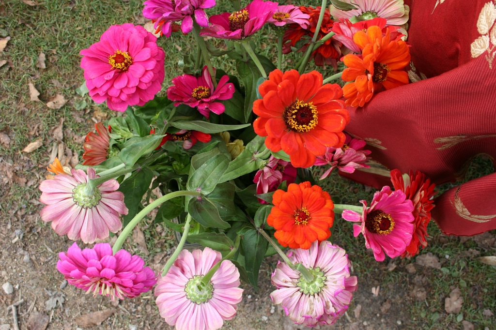 Vibrant zinnias at the Homestead apiaries stand.