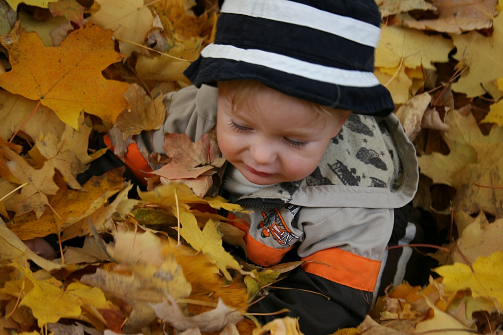 My great nephew, who just moved to rural Faribault from Utah, didn't quite know what to think of being placed atop a leaf pile.