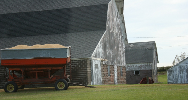 Corn fills a wagon at a farm site east of Morristown along Rice County Road 15.