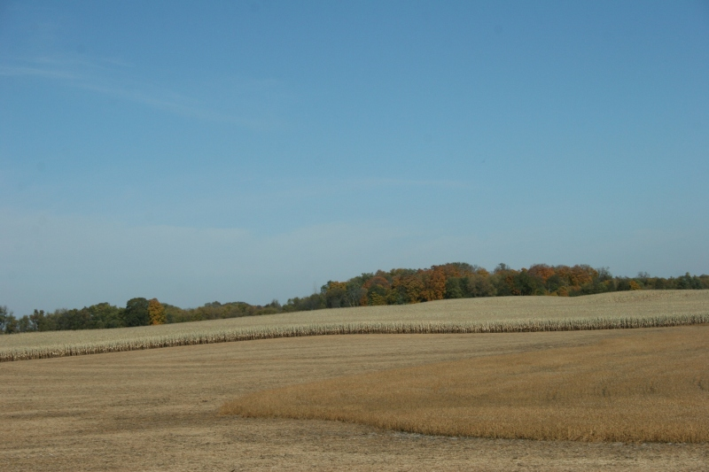 Rural Rice County, Minnesota, west of Faribault.