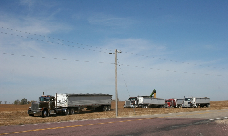 Semis await the harvest in southeastern LeSueur County.