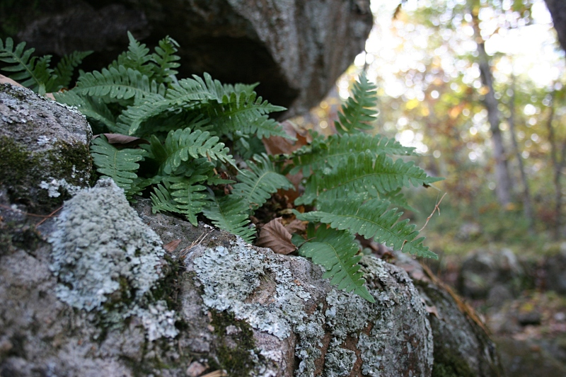 Ferns sprout from rock along Eagle Point Trail.