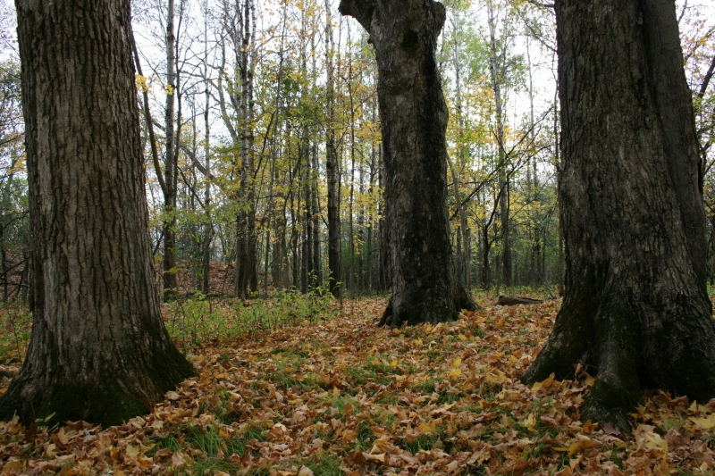 A slower pace allows one to notice the individual trees in the woods.