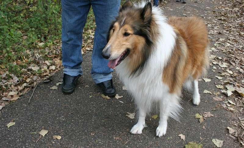 Rudi, one friendly collie who cooperated for one photo.