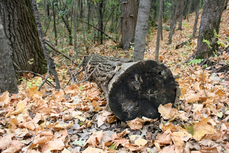 Fallen trees and branches litter the woods.