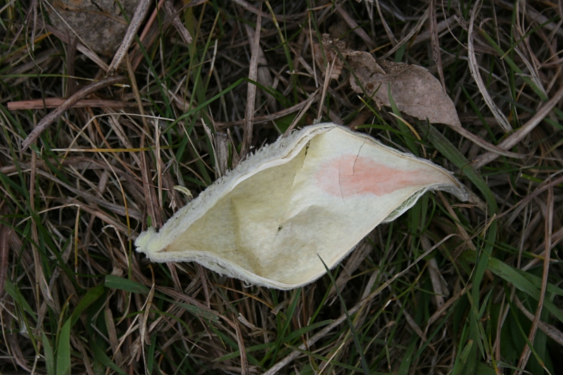 Even a dried milkweed pod does not go unnoticed.