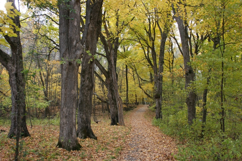 A trail through the woods at River Bend Nature Center, Faribault.