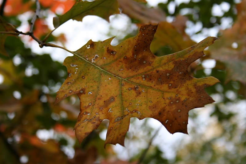 A single leaf is worthy of notice for its mottled beauty.