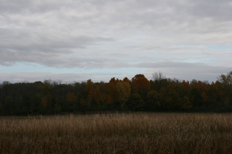 A treeline showcases the changing colors of autumn.