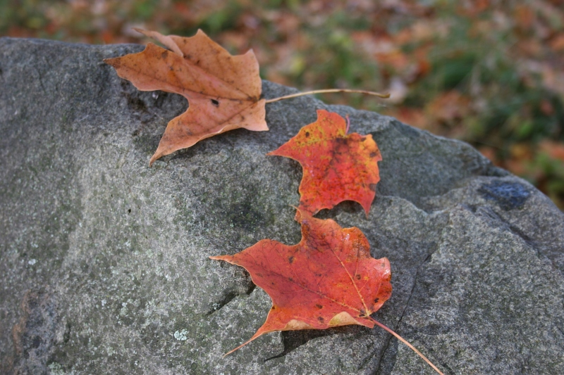 Leaves upon rock, reflect the unchangeable and the changeable.