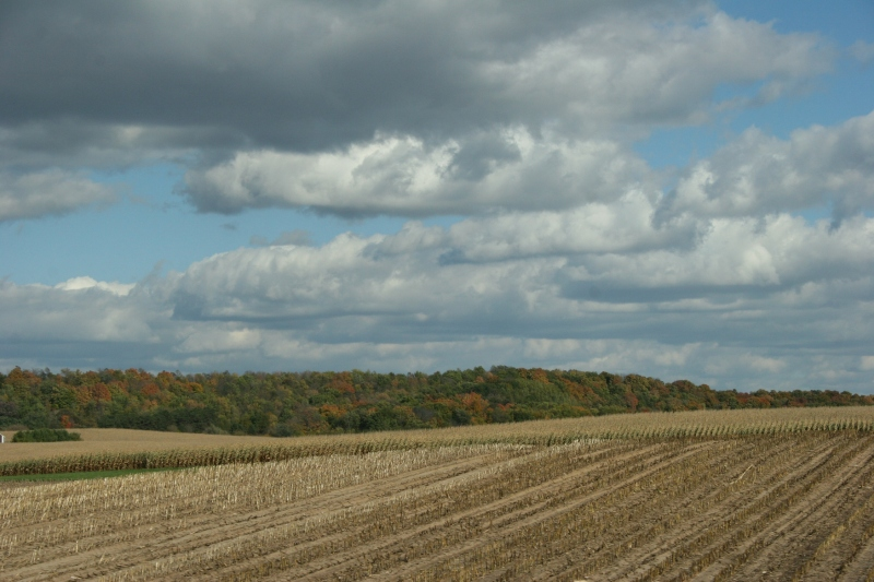 Rural, harvested cornfield