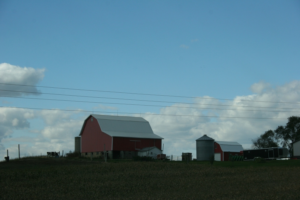 Rural, red barn and lone cow