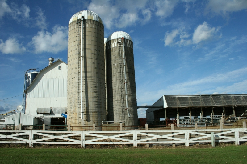 Rural, white barn and silos