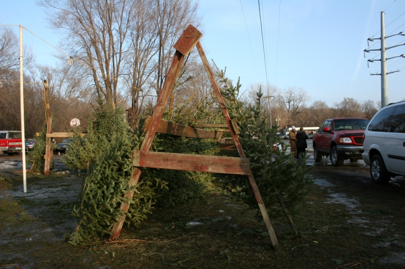 You'll find trees in varying  sizes at Ken's lot.