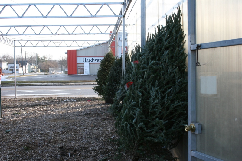There are plenty of trees to choose from inside and outside the historic Farmer Seed and Nursery.