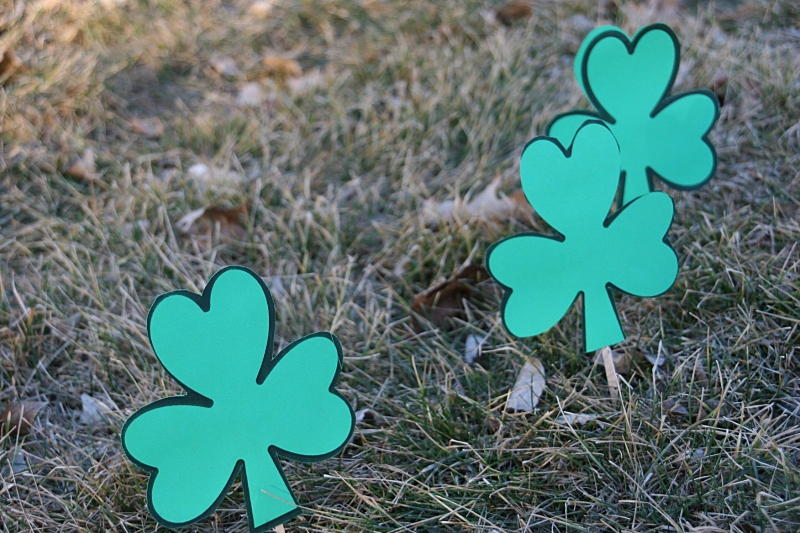 Shamrock, trio of