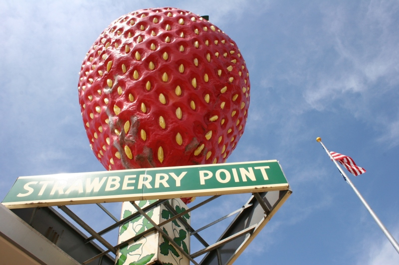 The world's largest strawberry sculpture is made of fiberglass, weighs 1,430 pounds, is 15 feet high, 12 feet wide and was constructed in 1967.