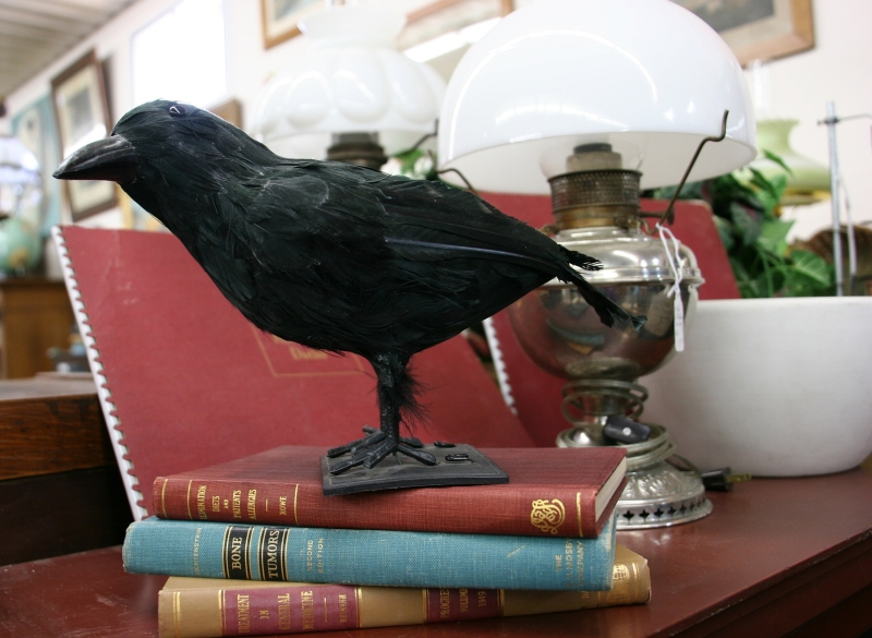 "I expected to find Edgar Alan Poe collections beneath this perched raven. (Is this a raven?) But, instead, the books are titled ""Treatment in General Medicine,"" ""Bone/Tumors"" and ""Elimination Diets and Patients Allergies."""